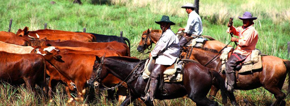 Rindahead emm paraguayischen Chaco. © Horst Martens